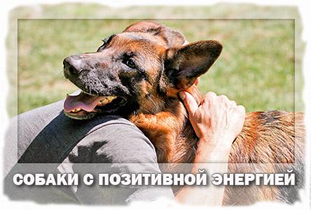 положительная энергетика собак