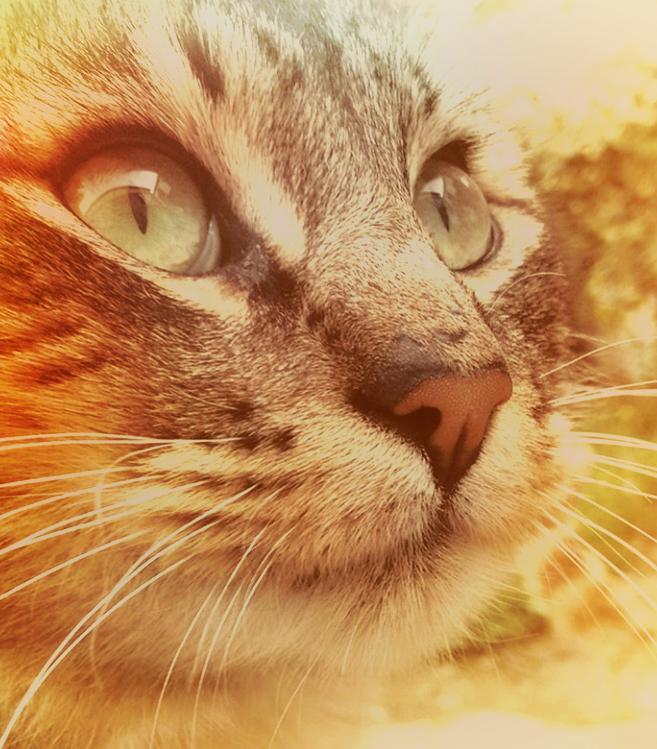 Кошки, которые лечат своей энергией